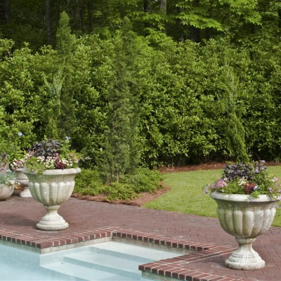 poolside potted garden containers