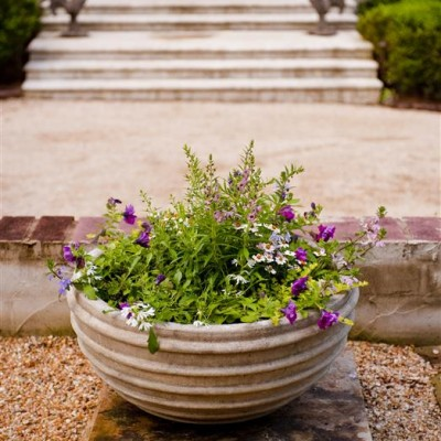 container garden with purple flowers