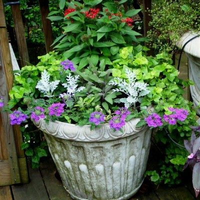 Pots & Container Gardens (17)