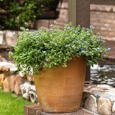 Pots & Container Gardens (18)