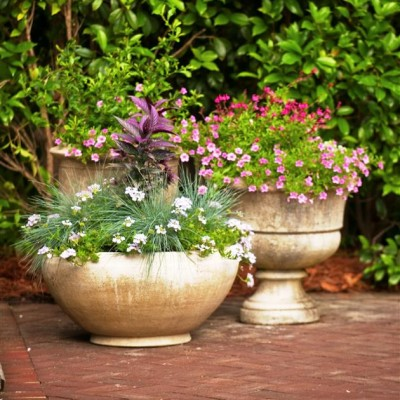 Pots & Container Gardens (19)