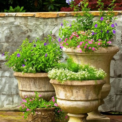 Pots & Container Gardens (20)