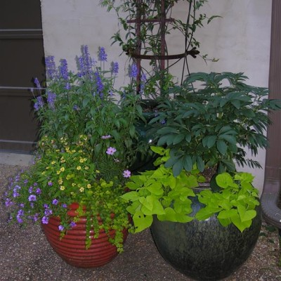 potted garden with purple flowers and greenery