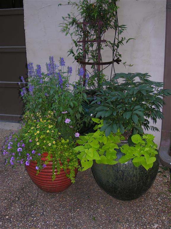 ... Potted Garden With Purple Flowers And Greenery ...