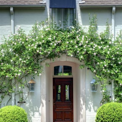 Roses over doorway